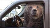 В США медведь угнал и разбил внедорожник